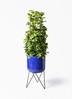 観葉植物 ポトス 8号 ビトロ エンデカ ブルー アイアンポットスタンド ブラック 付き
