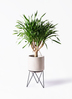 観葉植物 ドラセナ パラオ 8号 ビトロ エンデカ クリーム アイアンポットスタンド ブラック 付き