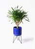観葉植物 ドラセナ パラオ 8号 ビトロ エンデカ ブルー アイアンポットスタンド ブラック 付き