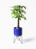 観葉植物 パキラ 8号 ねじり ビトロ エンデカ ブルー アイアンポットスタンド ブラック 付き