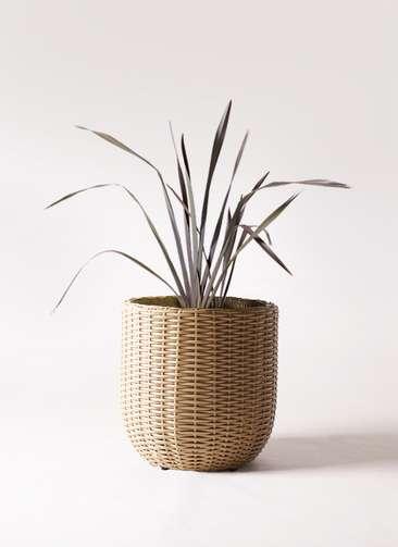 観葉植物 ニューサイラン 銅葉 7号 ウィッカーポットエッグ ベージュ 付き