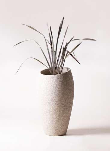 観葉植物 ニューサイラン 銅葉 7号 エコストーントールタイプ Light Gray 付き