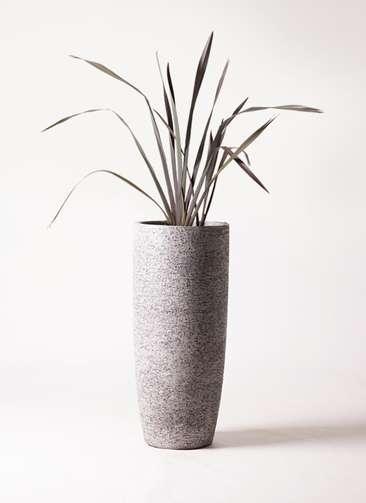観葉植物 ニューサイラン 銅葉 7号 エコストーントールタイプ Gray 付き