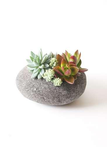 多肉植物 寄せ植え 黒石 No.01