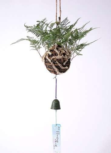 盆栽 しのぶ 鉄風鈴