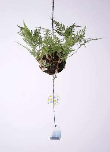 盆栽 しのぶ ガラス風鈴