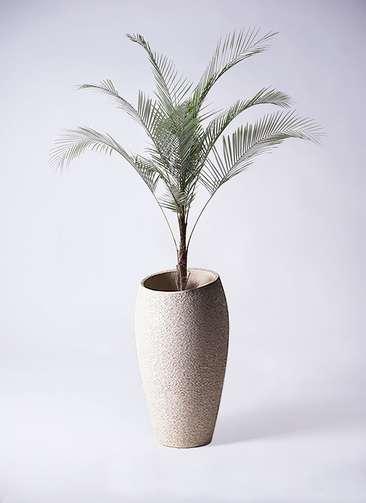 観葉植物 ココスヤシ ヤタイヤシ ひめここす 8号 エコストーントールタイプ Light Gray 付き