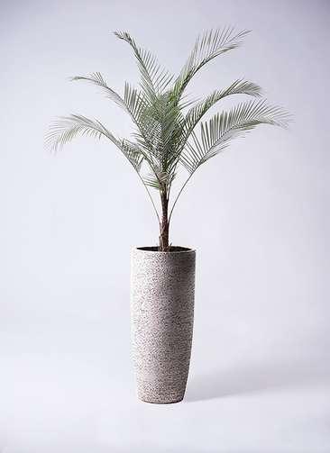 観葉植物 ヒメココス 8号 エコストーントールタイプ Gray 付き