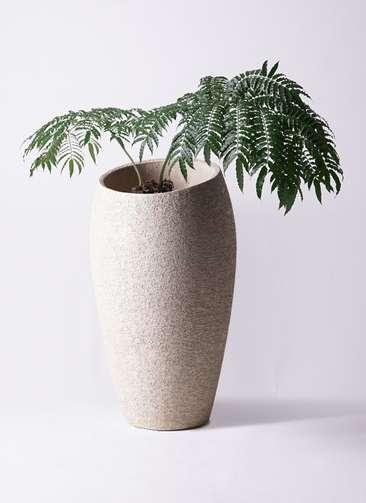 観葉植物 リュウビンタイ 8号 エコストーントールタイプ Light Gray 付き