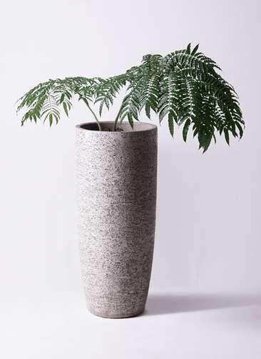 観葉植物 リュウビンタイ 8号 エコストーントールタイプ Gray 付き