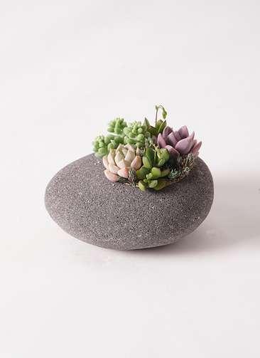 多肉植物 寄せ植え 黒石 #006