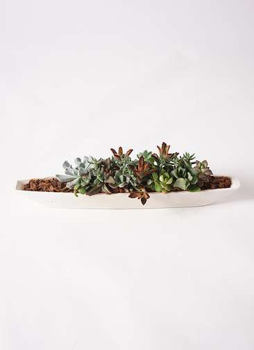 多肉植物 寄せ植え ふね型 バークチップ #002