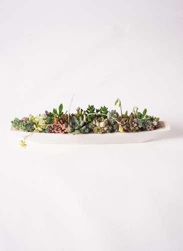 多肉植物 寄せ植え ふね型 白砂 #001