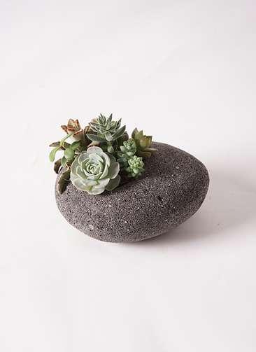多肉植物 寄せ植え 黒石 #004