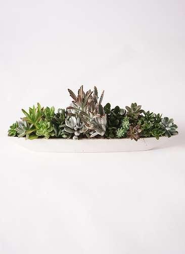 多肉植物 寄せ植え ふね型 #001