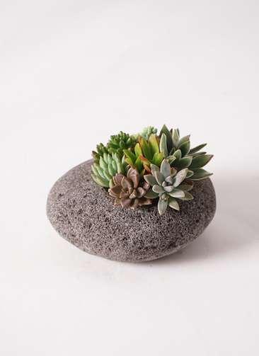 多肉植物 寄せ植え 黒石 #003
