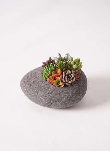 多肉植物 寄せ植え 黒石 #002