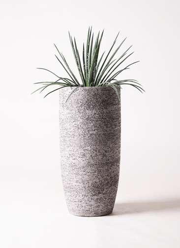 観葉植物 アガベ 6号 ジェミニフローラ エコストーントールタイプ Gray 付き