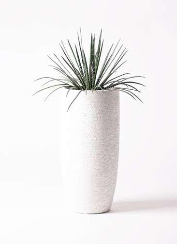 観葉植物 アガベ 6号 ジェミニフローラ エコストーントールタイプ white 付き
