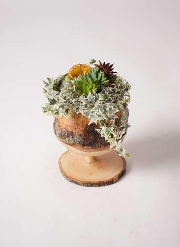多肉植物 寄せ植え Mongo Wood Wine #001