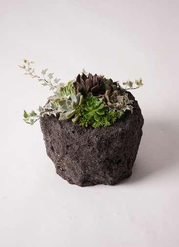 多肉植物 寄せ植え Rugged Stone Pot #001