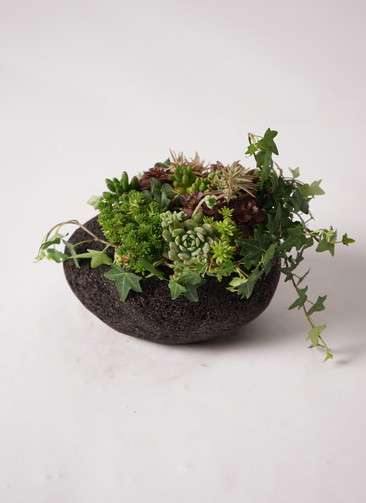 多肉植物 寄せ植え 黒石 #007