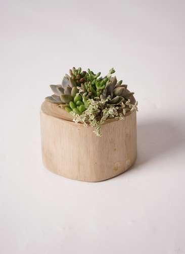多肉植物 寄せ植え Teak Wood Round #001