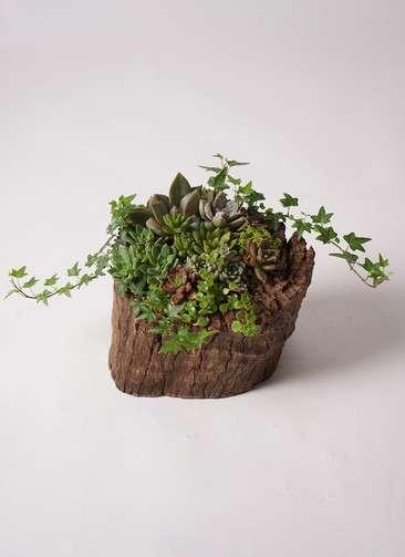 多肉植物 寄せ植え Stamp Pot #001