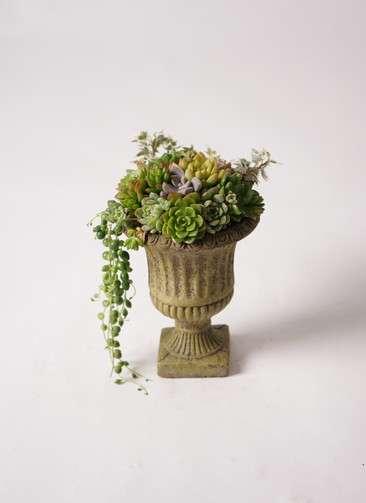 多肉植物 寄せ植え ハサンカップ #001