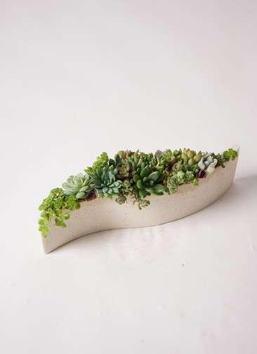 多肉植物 寄せ植え ポリストーン wave #001