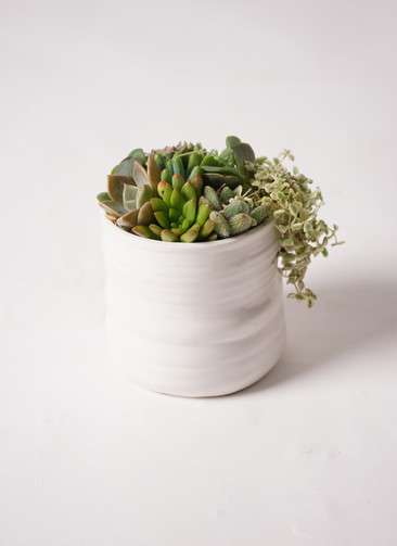 多肉植物 寄せ植え Ceramic Mat White #001