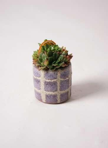 多肉植物 寄せ植え Favor Pot Gray #003