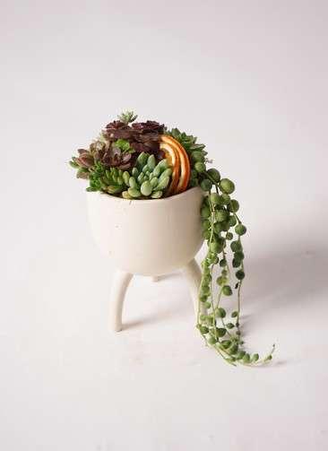 多肉植物 寄せ植え Four Foot Cup #002