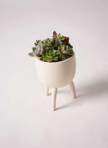 多肉植物 寄せ植え Four Foot Cup #001