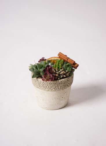 多肉植物 寄せ植え リト ラウンド 3号 受け皿付き #002