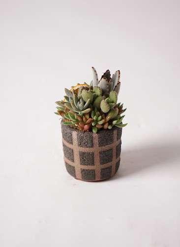 多肉植物 寄せ植え Favor Pot Brown #001