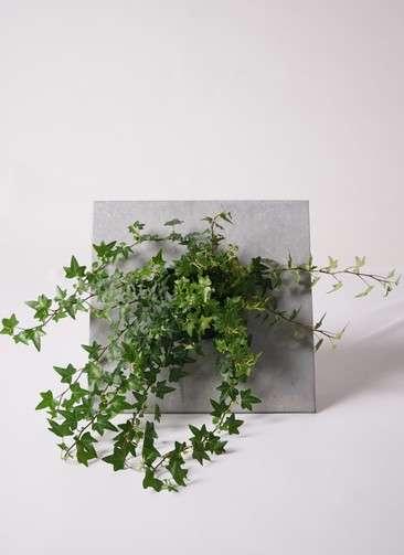 多肉植物 寄せ植え green eco wall ブリキシルバー #002