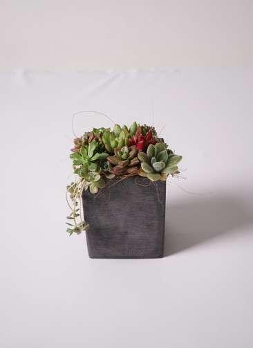 多肉植物 寄せ植え ポリストーン キューブ S ブラック #002