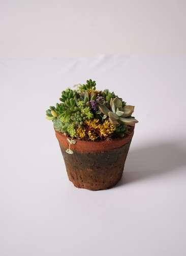 多肉植物 寄せ植え アンティークポット #003