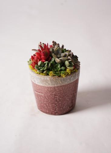 多肉植物 寄せ植え クレーパー 4号 受け皿付き 黄 #001