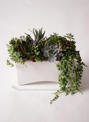 多肉植物 寄せ植え アーチワイド ホワイト #001