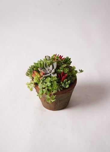 多肉植物 寄せ植え アンティークポット #002
