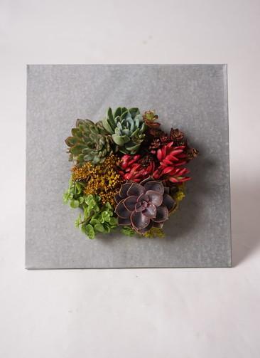 多肉植物 寄せ植え green eco wall ブリキシルバー #001