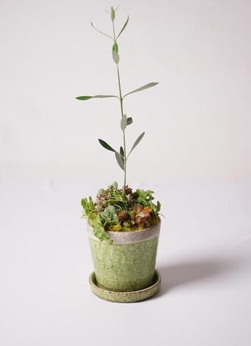 多肉植物 寄せ植え クレーパー 4号 受け皿付き 鴬 #001 (オリーブ入り)