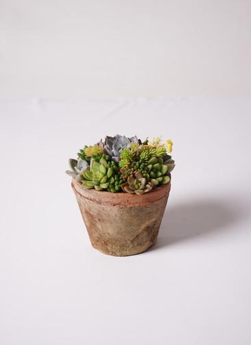 多肉植物 寄せ植え アンティークポット #004