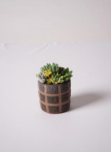 多肉植物 寄せ植え Favor Pot Brown #003