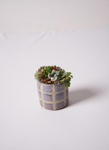 多肉植物 寄せ植え Favor Pot Gray #002