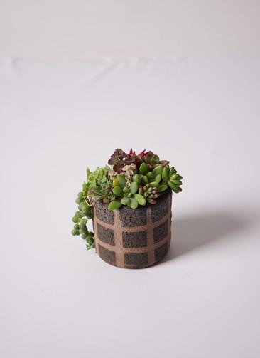 多肉植物 寄せ植え Favor Pot Brown #002