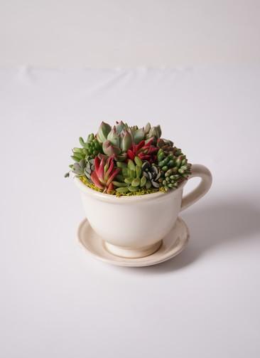 多肉植物 寄せ植え GLAZE カップ・ポットアイボリー #001