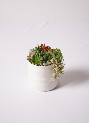 多肉植物 寄せ植え Ceramic Mat White #003